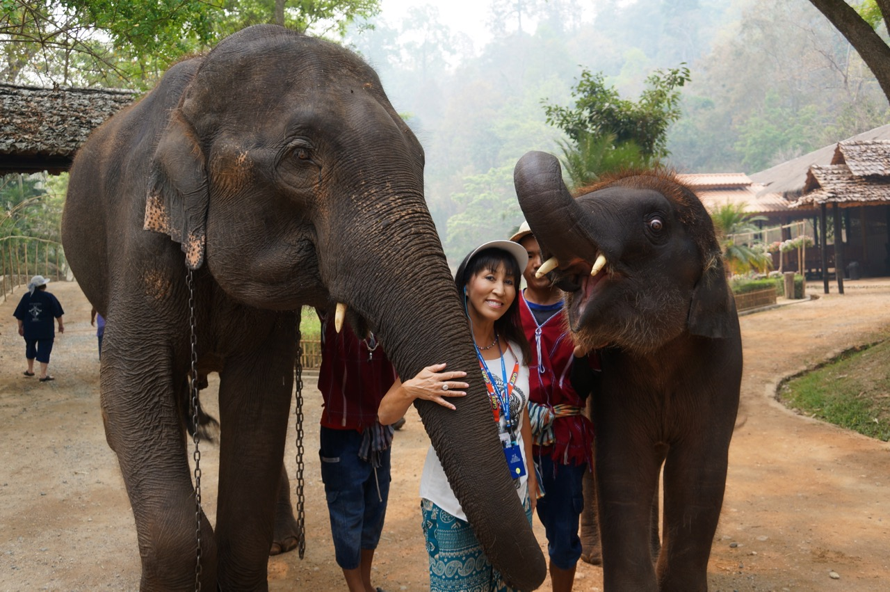 Saving the Elephants in Thailand