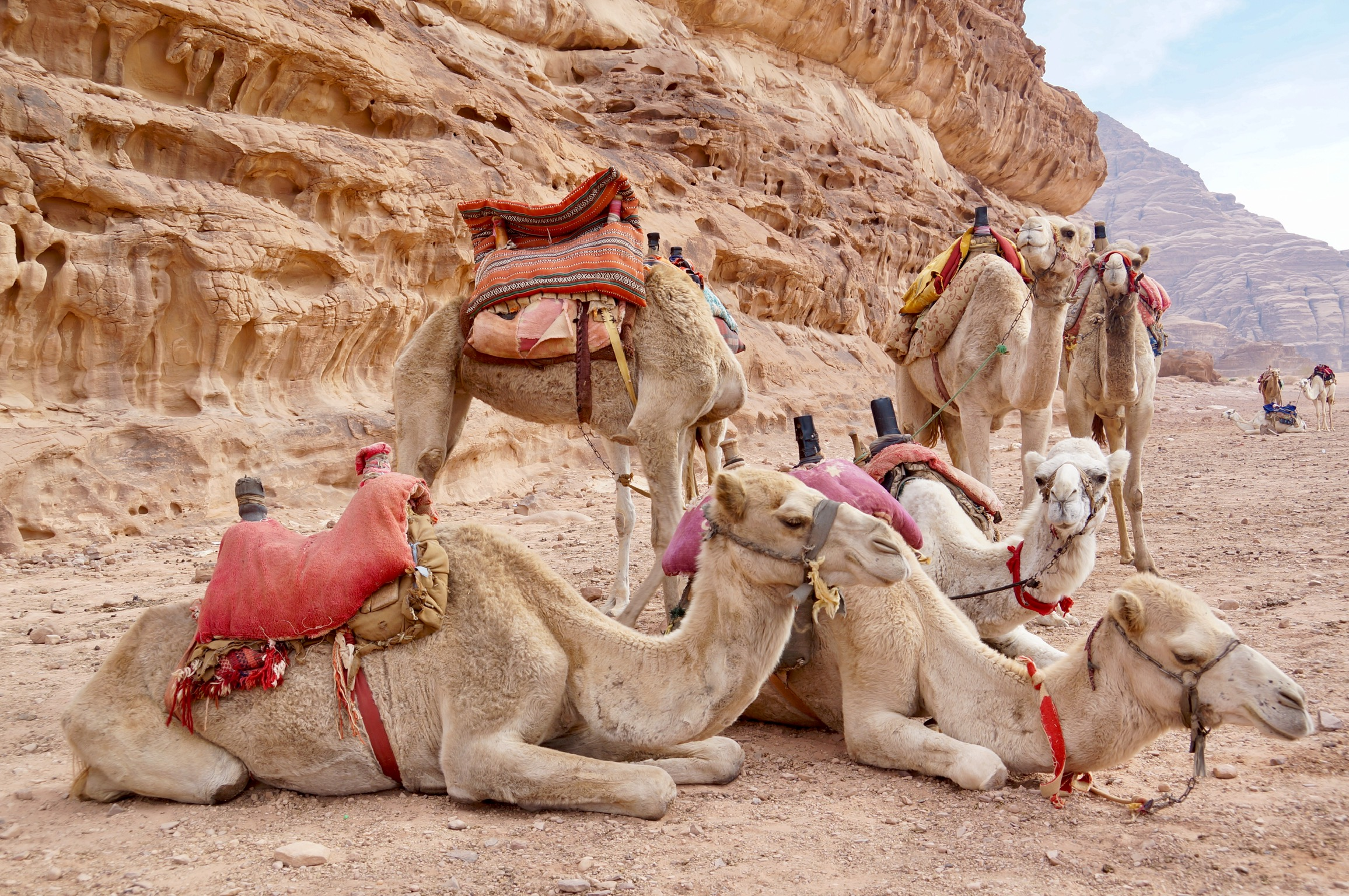 Lawrence of Arabia in Wadi Rum