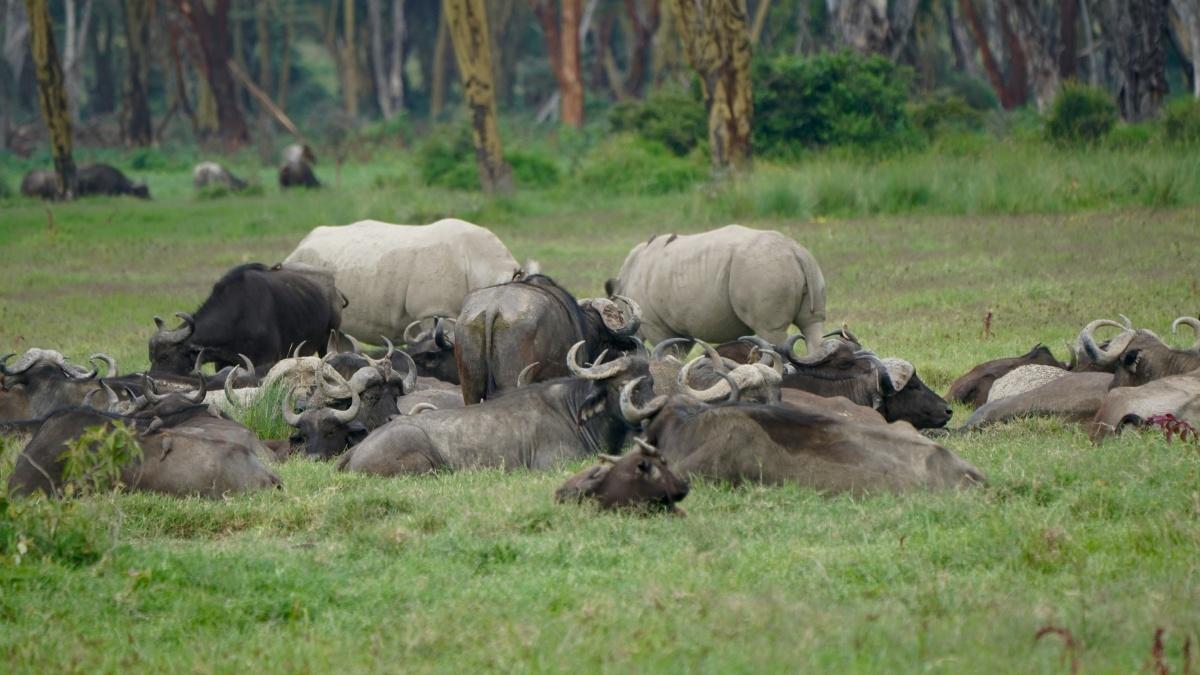 Animals at Lake Nakuru
