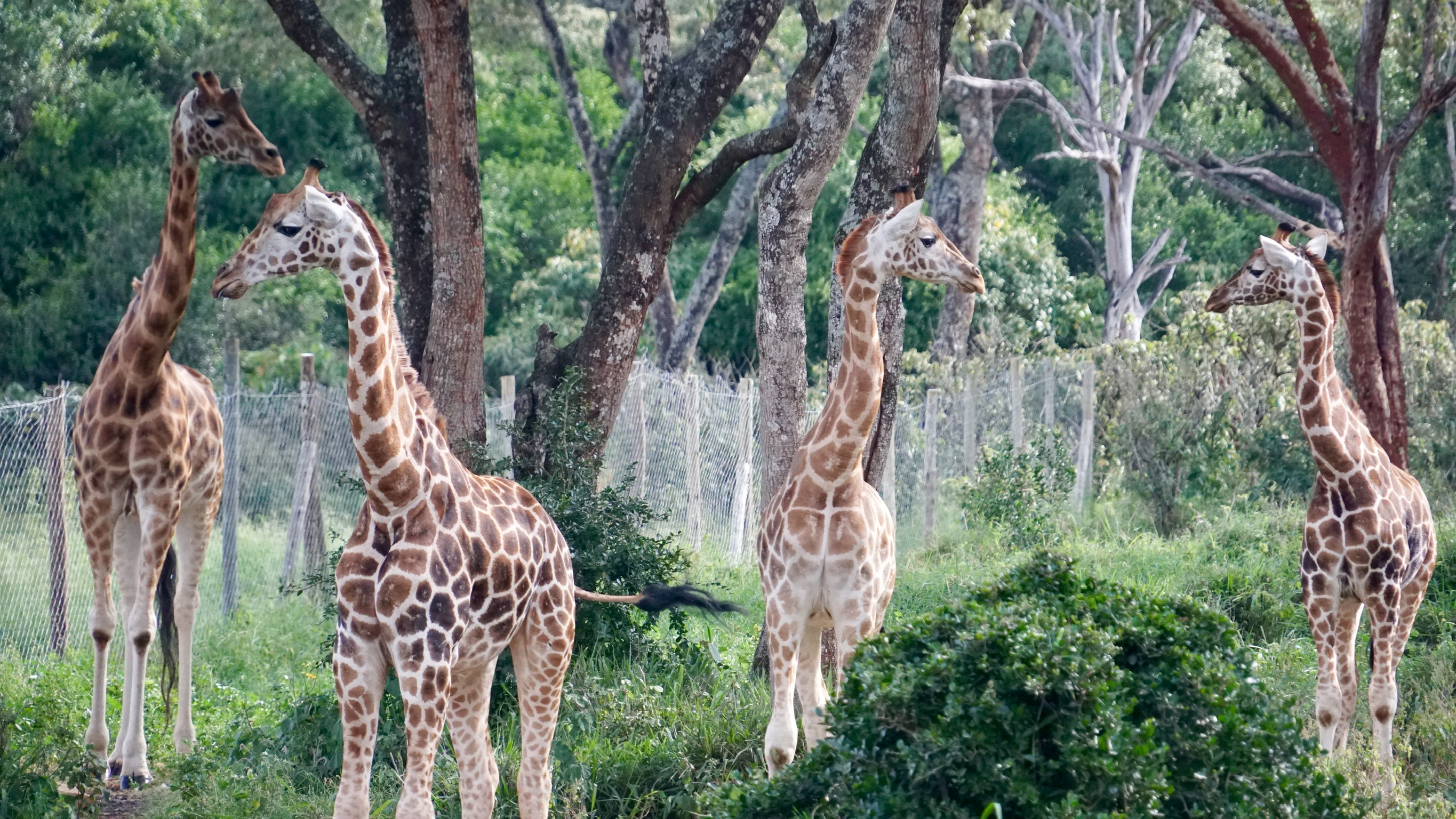 Nairobi…a Day with Elephants and Giraffes