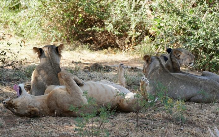 Animals of Samburu