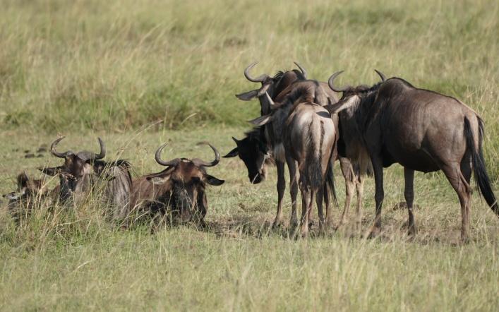 Migration to the Masai Mara