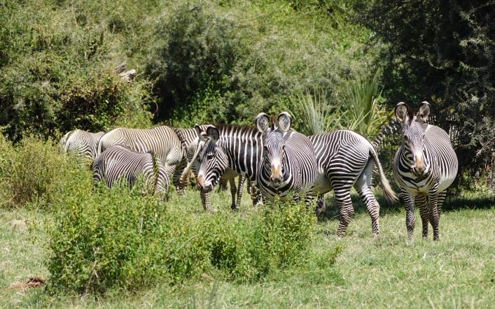 Safari Game Drive in Buffalo Springs