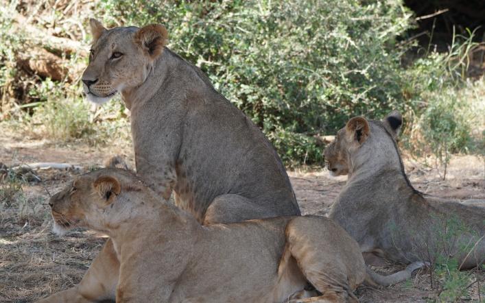The Predators in Africa…