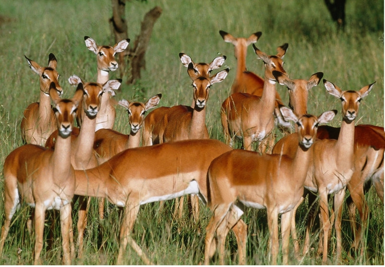 Antelope families & more in the Serengeti