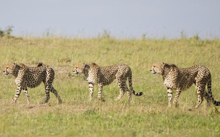 Tarangire National Forest, Tanzania!