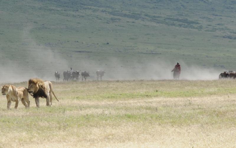 Inside Ngorongoro Crater